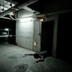 Scène de crime - photographie conceptuelle et narrative
